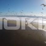 Смартфоны от Nokia засветились на видео
